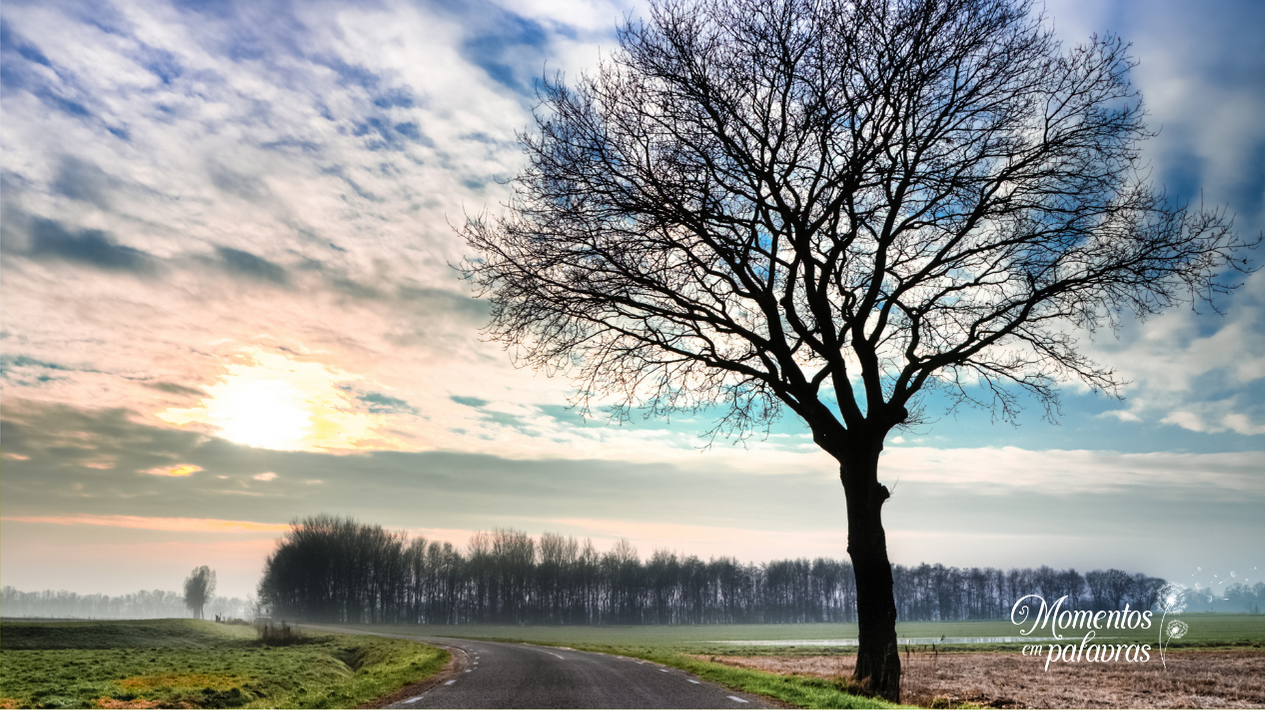 O vento sopra, as folhas caem, mas a árvore permanece