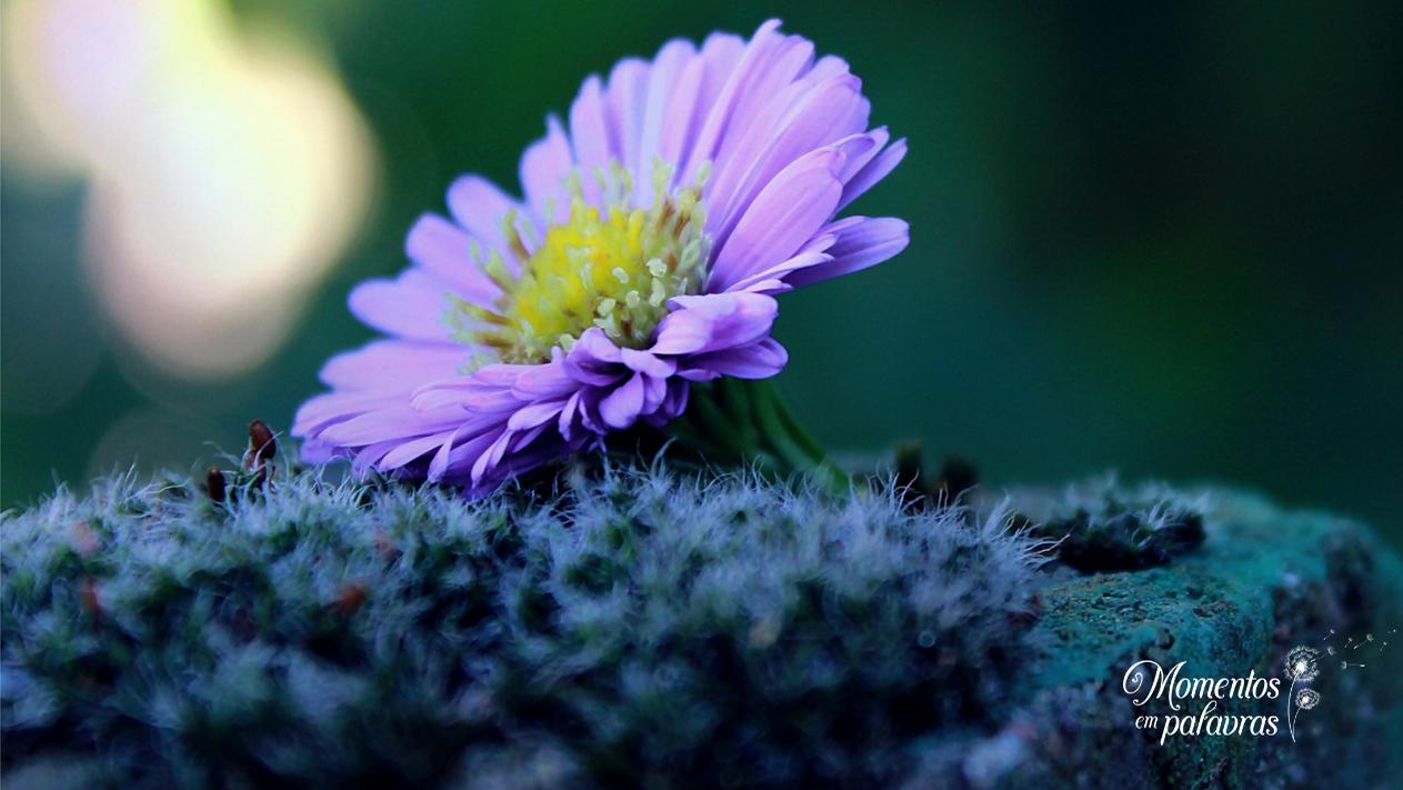Olhar para Jesus como a simplicidade de uma flor roxa