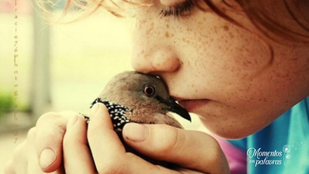 Criança segura passarinho em oração